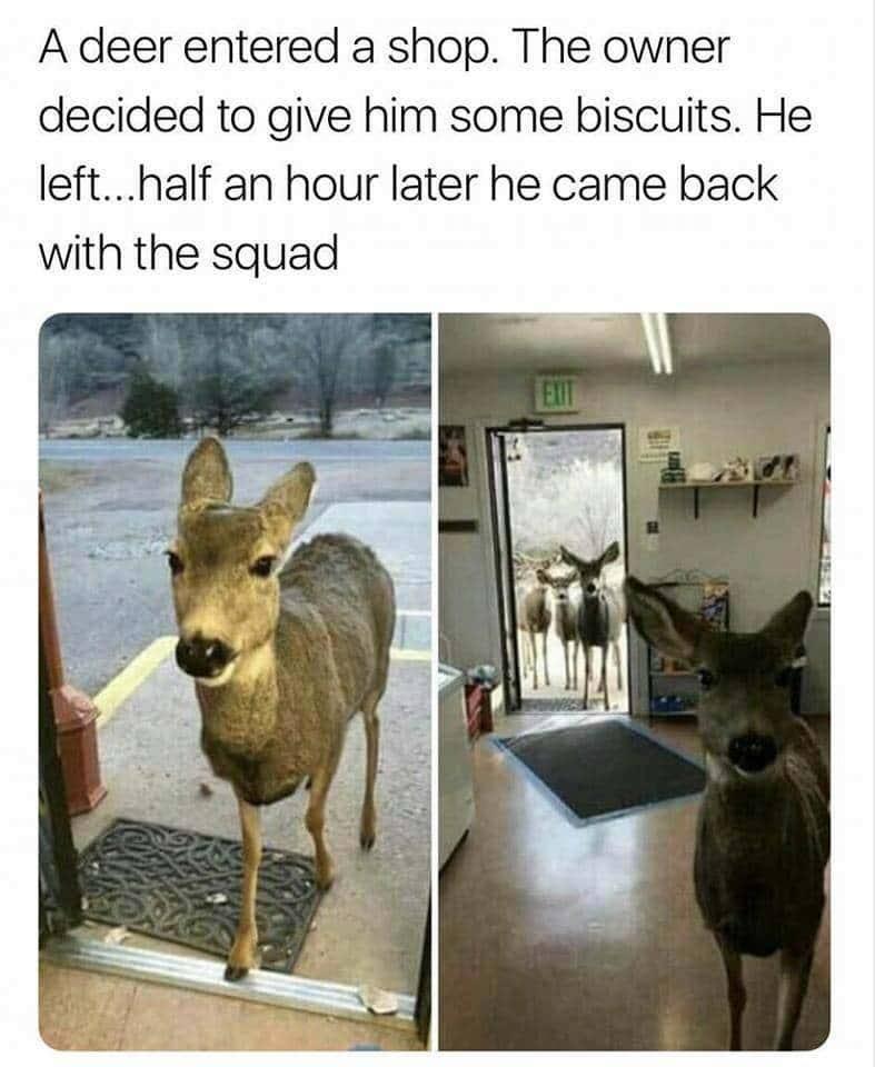 Deer Squad.jpg