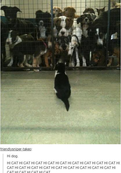 Hi Cat.png